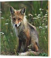 Kit Red Fox Wood Print