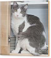 Kitchen Cubbard Cat Wood Print