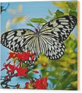 Kite Butterfly Wood Print
