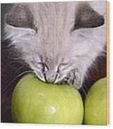 Kitten And An Apple Wood Print