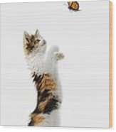 Kitten And Monarch Butterfly Wood Print