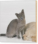 Kitten And Puppy Lying Together Wood Print