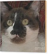 Kitten Black On Chocolate Silktapestrycatstm Wood Print