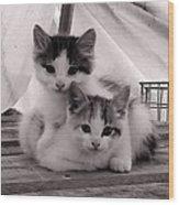 Kitten Cuddles Wood Print