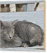 Kitten In Hydra Island Wood Print