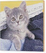 Kitten In Laundry Wood Print