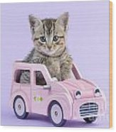Kitten In Pink Car  Wood Print by Greg Cuddiford