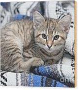 Kitten In The Blanket Wood Print