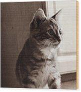 Kitten In The Light Wood Print