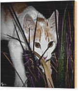 Kitten In The Plant Wood Print