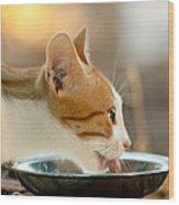 Kitten Licking Up Her Milk Wood Print