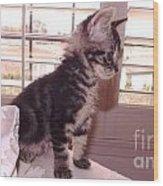 Kitten On Alert Wood Print