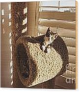 Kitten Peeks Through Hole In Condo Wood Print