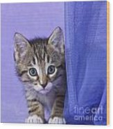 Kitten With A Curtain Wood Print