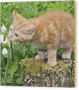 Kitten With Flowers Wood Print