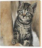 Kitten With Golden Retriever Wood Print
