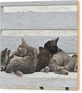 Kittens In Hydra Island Wood Print