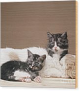 Kittens Lying With Puppy Wood Print