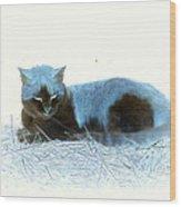 Kitty Blue IIII Wood Print