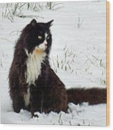 Kitty Cat In The Snow Wood Print