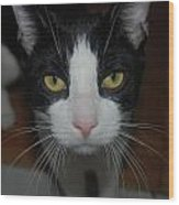 Kitty Cat Wood Print