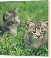 Kitty In Grass Wood Print