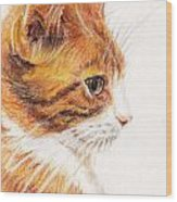 Kitty Kat Iphone Cases Smart Phones Cells And Mobile Cases Carole Spandau Cbs Art 338 Wood Print
