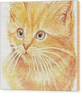 Kitty Kat Iphone Cases Smart Phones Cells And Mobile Cases Carole Spandau Cbs Art 339 Wood Print