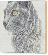 Kitty Kat Iphone Cases Smart Phones Cells And Mobile Cases Carole Spandau Cbs Art 347 Wood Print