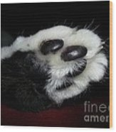 Kitty Toe Beans Wood Print