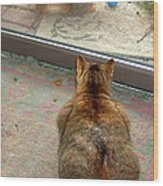 Kitty Watches The Squirrel Wood Print