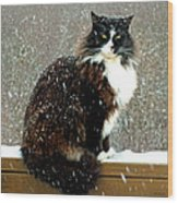 Kittycat In The Snow On The Fence Wood Print