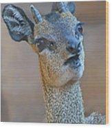 Klipspringer Portrait Wood Print