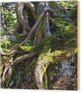 Knarly Old Tree Stump Switzerland Wood Print