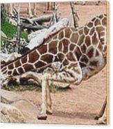 Kneeling Giraffe Wood Print