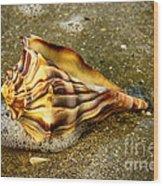 Knobbed Whelk 9 Botany Bay Wood Print
