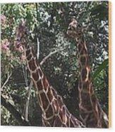 Knockin' Around The Zoo Wood Print