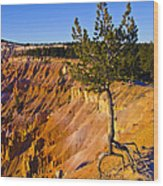 Know Your Roots - Bryce Canyon Wood Print