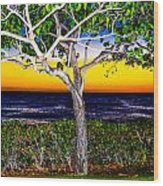Ko Olina Tree In Sunset Wood Print