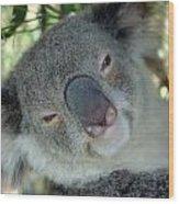 Koala Face Wood Print