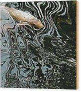 Koi In A Pond Wood Print
