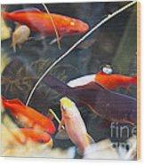 Koi Pond The Symbol Of Love And Friendship Wood Print