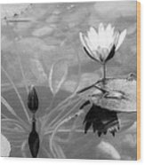 Koi Pond With Lily Pad Flower And Bud Black And White Wood Print