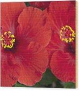 Kokio Ulaula - Tropical Red Hibiscus Wood Print
