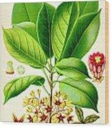 Kola Nut Wood Print