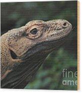Komodo-7399 Wood Print