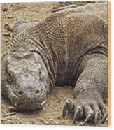 Komodo Dragon Male Basking Komodo Island Wood Print
