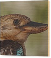 Kookaburra Portrait Wood Print