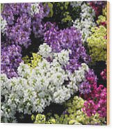 Many Colors Make A Beautiful Garden Wood Print