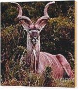 Kudu Bull Wood Print